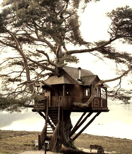 Treehouse Lodge, Scotland