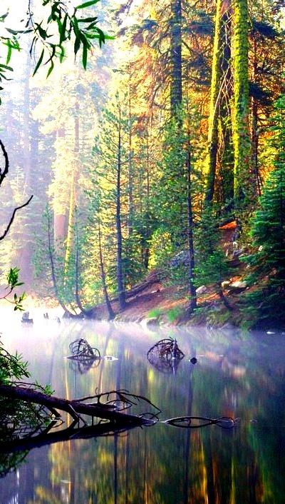 Misty, Huntington Lake, California